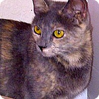 Adopt A Pet :: Sly - Escondido, CA