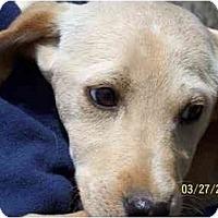 Adopt A Pet :: Jose' - York, SC