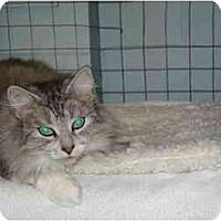 Adopt A Pet :: Muggs - Mission, BC