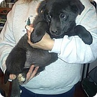 Adopt A Pet :: Tipper - Medora, IN