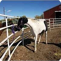Adopt A Pet :: Whisper - Pueblo, CO