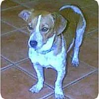 Adopt A Pet :: Hank - dewey, AZ