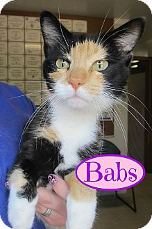 Calico Cat for adoption in Menomonie, Wisconsin - Babs
