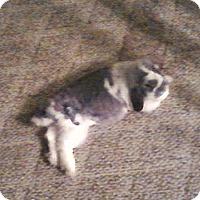 Adopt A Pet :: Footsie - Williston, FL