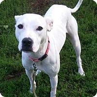 Adopt A Pet :: Dot - Oberlin, OH