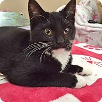 Adopt A Pet :: Harrietta - Davis, CA