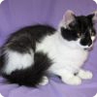 Adopt A Pet :: Zigfield - Powell, OH