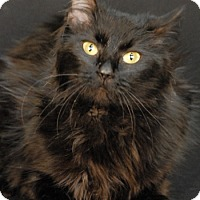 Adopt A Pet :: Sable - Newland, NC