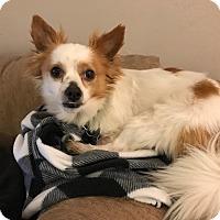 Adopt A Pet :: Taylor - San Diego, CA