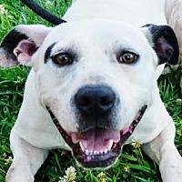 Adopt A Pet :: Sheila - LaHarpe, KS
