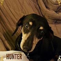 Adopt A Pet :: HUNTER - Taunton, MA