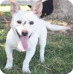 Corgi Mix Dog for adoption in El Dorado Hills, California - Fletcher