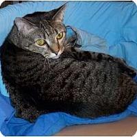 Adopt A Pet :: Wiki - Acme, PA