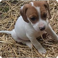 Adopt A Pet :: Chilly - Clayton, OH