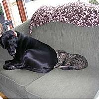 Adopt A Pet :: Solie - Acme, PA