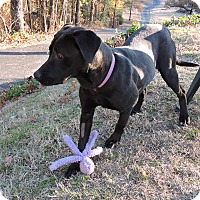 Adopt A Pet :: Lexi - Somers, CT