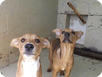 Hound (Unknown Type) Mix Dog for adoption in Thomaston, Georgia - Chloe & Zoey