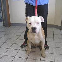 Adopt A Pet :: Little - Lancaster, CA