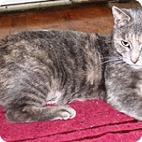 Adopt A Pet :: Catherine - Lebanon, PA