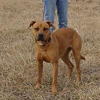 Adopt A Pet :: Phoenix - Cameron, MO