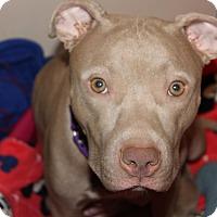 Adopt A Pet :: Nahla - Tampa, FL