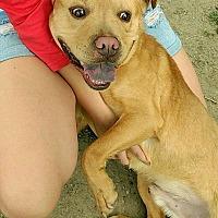 Adopt A Pet :: Gambit - Troy, MI
