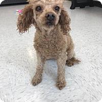 Adopt A Pet :: Pearlie - Binghamton, NY