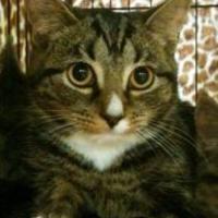 Adopt A Pet :: Kiki Spicer - Oswego, NY