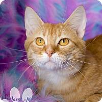 Adopt A Pet :: MIKEY - Toledo, OH