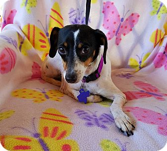 Terrier (Unknown Type, Small) Mix Dog for adoption in Buffalo, New York - Waverly