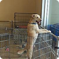 Adopt A Pet :: Titan - Apache Junction, AZ