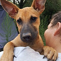 Adopt A Pet :: Sarah - CRANSTON, RI
