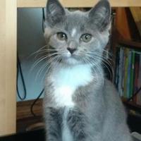 Adopt A Pet :: Pat - DeKalb, IL