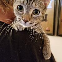 Adopt A Pet :: Baby Girl - Honolulu, HI