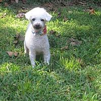 Adopt A Pet :: Nash - Courtesy Post - Spartanburg, SC