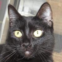 Adopt A Pet :: Sabrina - Austin, TX