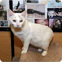 Adopt A Pet :: Thoms O'Malley - Farmingdale, NY