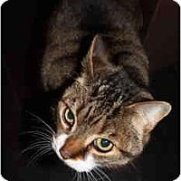 Adopt A Pet :: Bizo - Etobicoke, ON