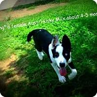 Adopt A Pet :: Spring - Gadsden, AL