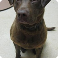Adopt A Pet :: Jenny - Gary, IN
