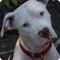 Adopt A Pet :: Kimmie - Bradenton, FL
