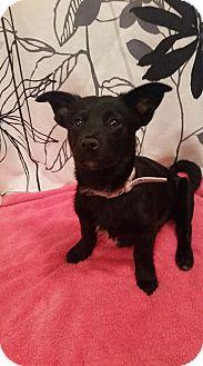 Lhasa Apso Mix Puppy for adoption in Broken Arrow, Oklahoma - Minnie