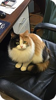 Domestic Mediumhair Cat for adoption in Woodstock, Ontario - Ruthie