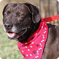 Adopt A Pet :: Max (Neutered)-Updated Photos - Marietta, OH