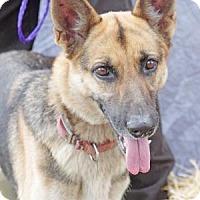 Adopt A Pet :: KiKi - Inverness, FL