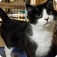 Adopt A Pet :: Doyle - Trevose, PA