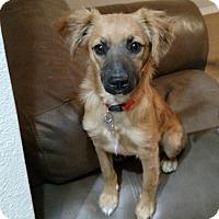 Adopt A Pet :: Vanilli - Las Cruces, NM