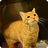 Adopt A Pet :: Red - Beacon, NY