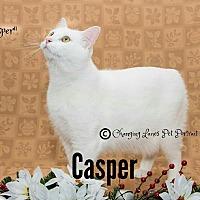 Adopt A Pet :: CASPER - Davison, MI