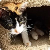 Adopt A Pet :: Farrah - Kalamazoo, MI
